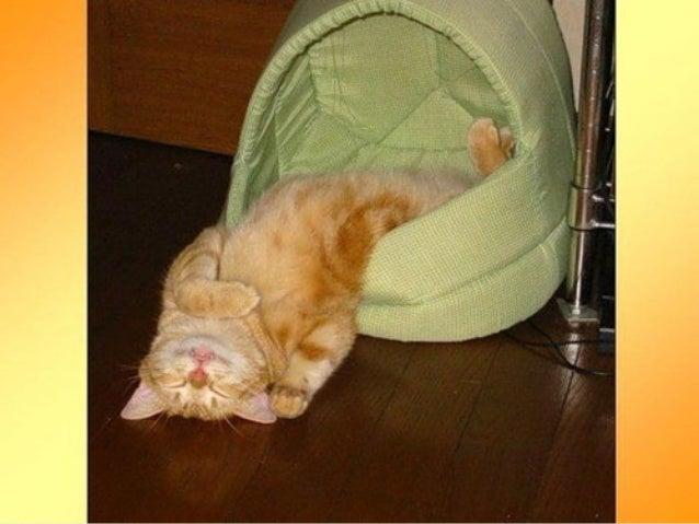 Bien dormir