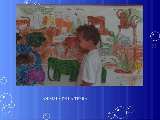 ANIMALS DE LA TERRA