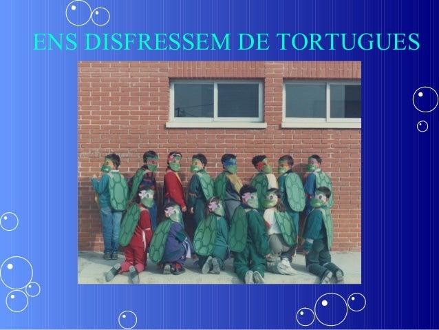 ENS DISFRESSEM DE TORTUGUES