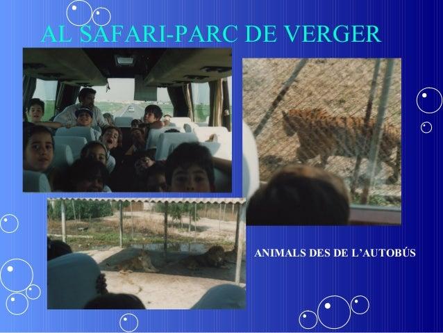 AL SAFARI-PARC DE VERGER               ANIMALS DES DE L'AUTOBÚS