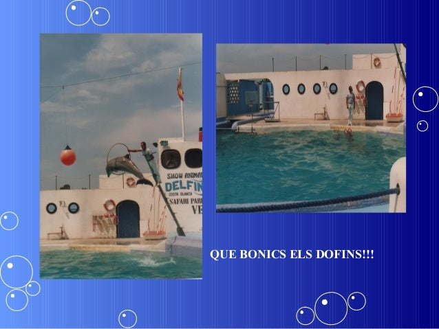 QUE BONICS ELS DOFINS!!!