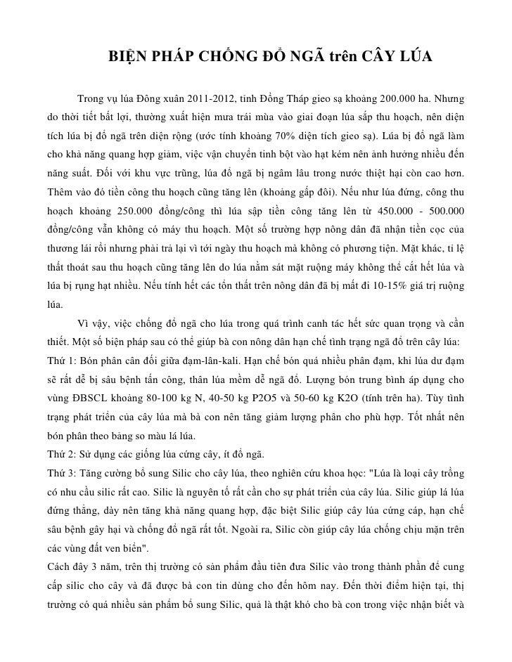 BIỆN PHÁP CHỐNG ĐỔ NGÃ trên CÂY LÚA       Trong vụ lúa Đông xuân 2011-2012, tỉnh Đồng Tháp gieo sạ khoảng 200.000 ha. Nhưn...