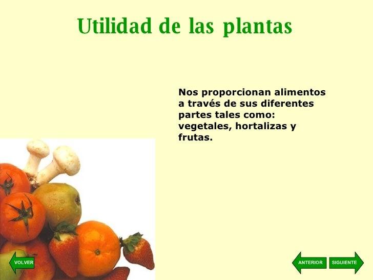 Bienvenido al maravilloso mundo de las plantas for Utilidad de las plantas ornamentales