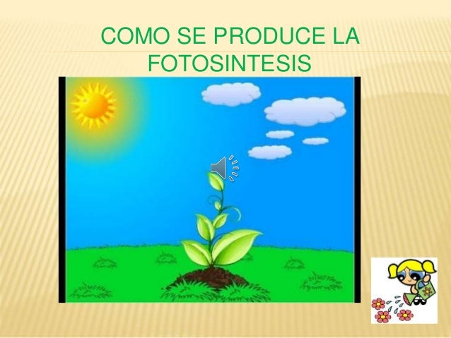 Bienvenidos Que Es La Fotosintesis