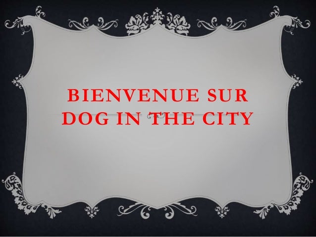 BIENVENUE SUR DOG IN THE CITY