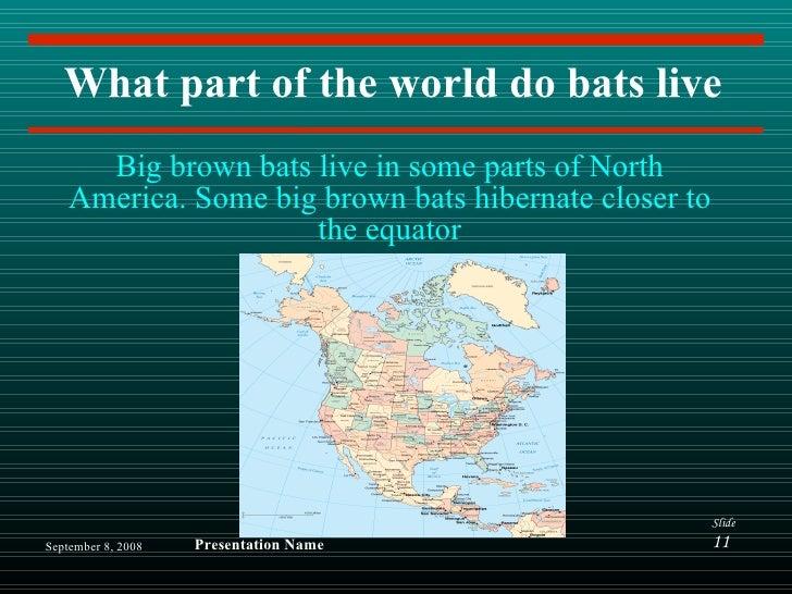 Big Brown Bats By Michael C