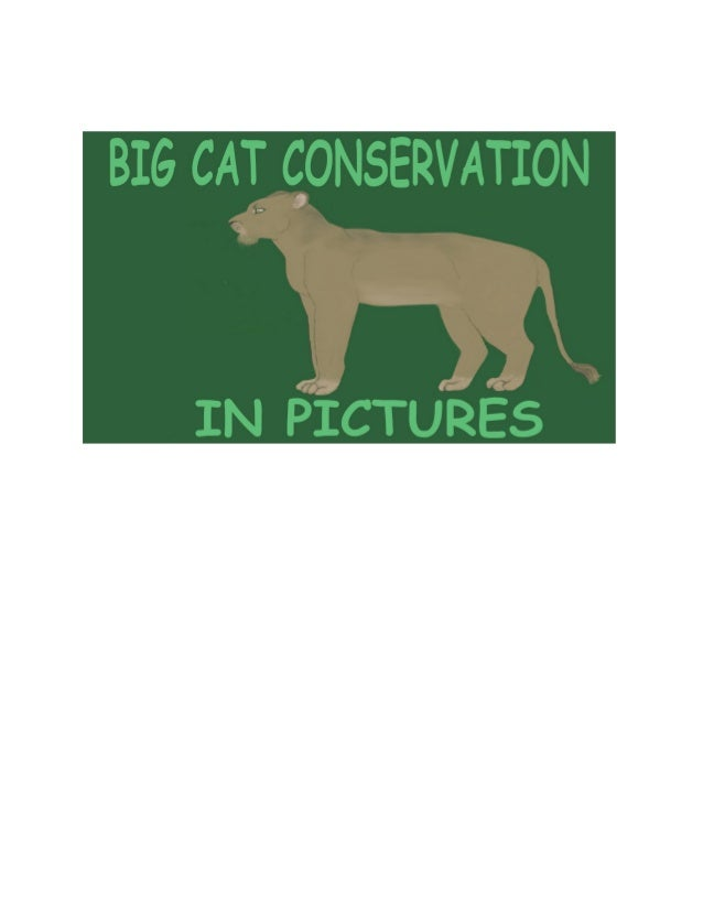 Big cat conservation in pictures
