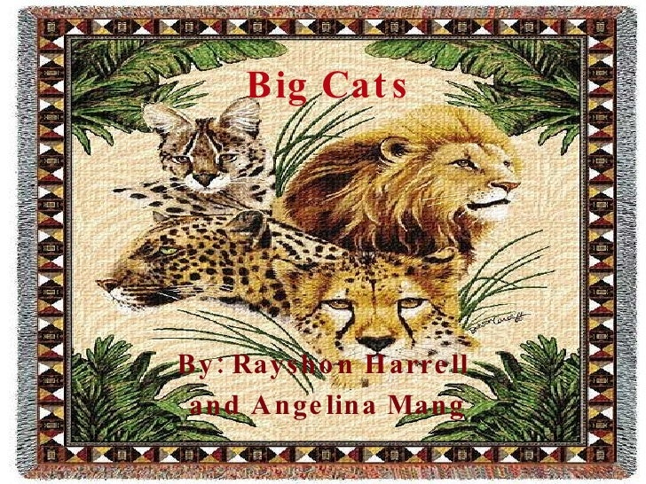 Big Cats By: Rayshon Harrell and Angelina Mang