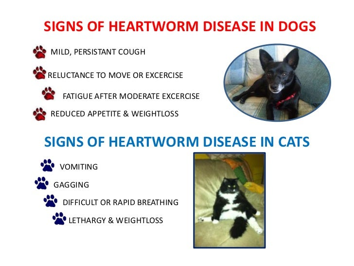 dogs tips heartworm testing