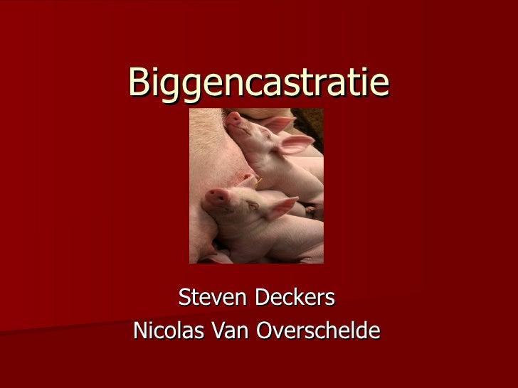 Biggencastratie Steven Deckers Nicolas Van Overschelde