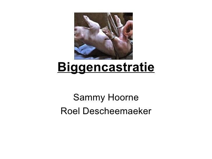 Biggencastratie Sammy Hoorne Roel Descheemaeker
