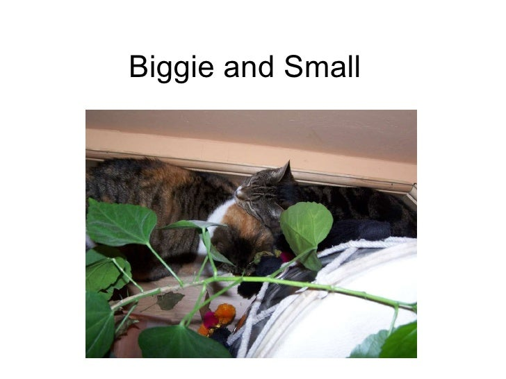 Biggie and Small