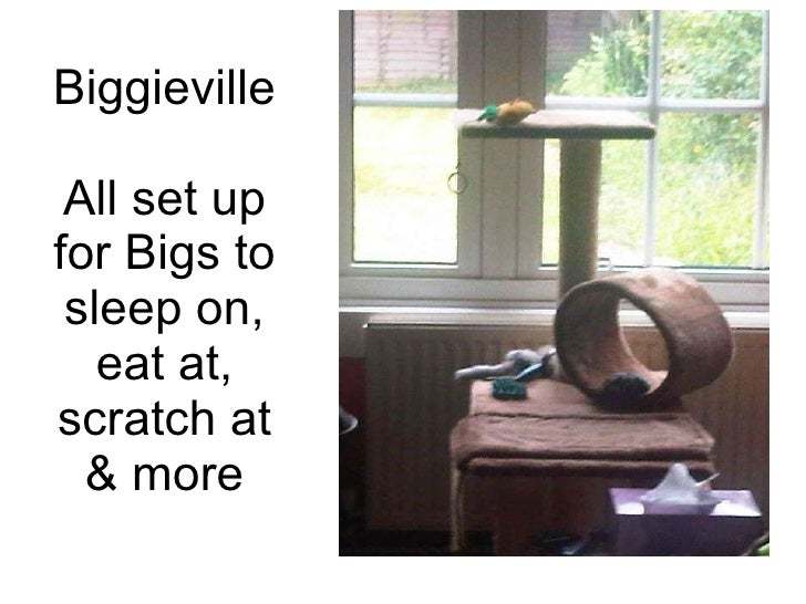 Biggieville All set up for Bigs to sleep on, eat at, scratch at & more