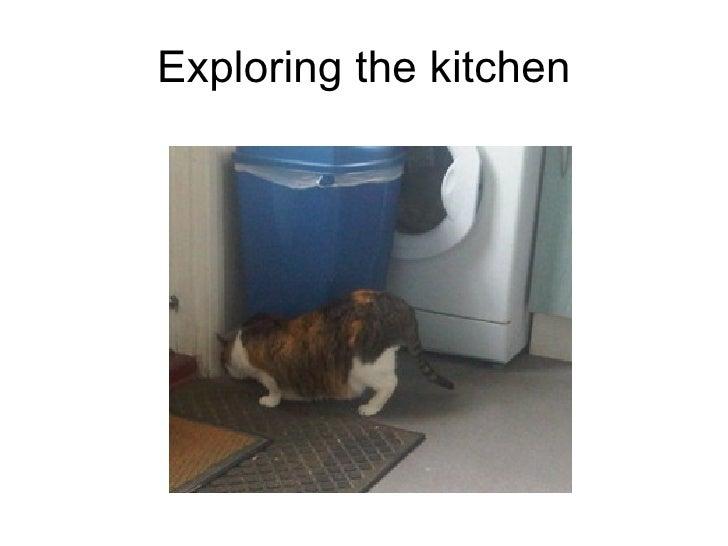 Exploring the kitchen