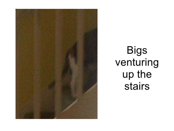 Bigs venturing up the stairs