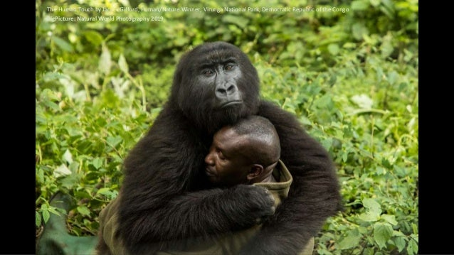 The Human Touch by James Gifford, Human/Nature Winner, Virunga National Park, Democratic Republic of the Congo BigPicture:...
