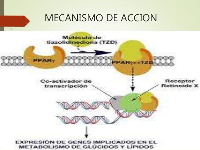 Metformina Efectos Secundarios Related Keywords