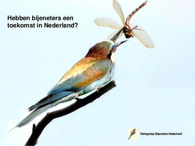 Hebben bijeneters een toekomst in Nederland? Werkgroep Bijeneters Nederland