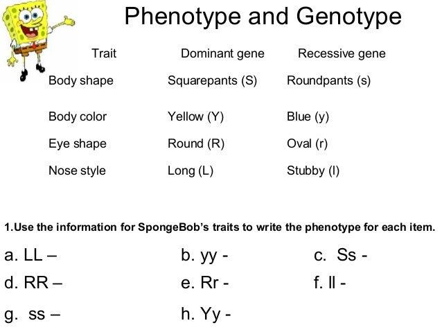 Worksheets Spongebob Genetics Worksheet spongebob genetics worksheet sharebrowse bikini bottom practice 4 02