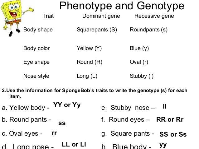 Bikini Bottom Genetics Practice - Bottom Genetics 2 Name ili'1pt ...
