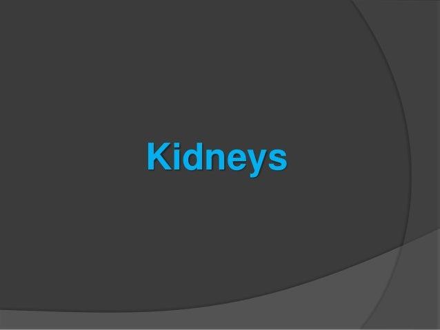 urinary system(urinary tract) Slide 3