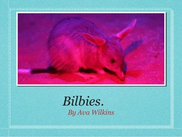 Bilbies. By Ava Wilkins