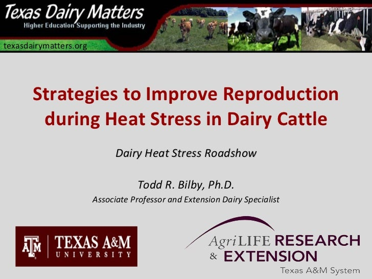 texasdairymatters.org       Strategies to Improve Reproduction        during Heat Stress in Dairy Cattle                  ...