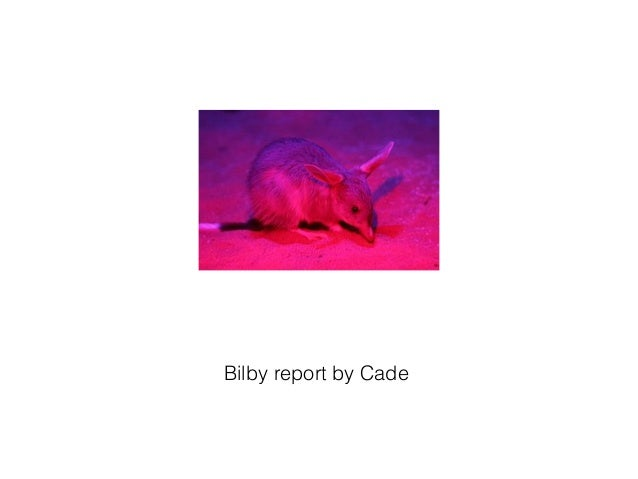 Bilby report by Cade