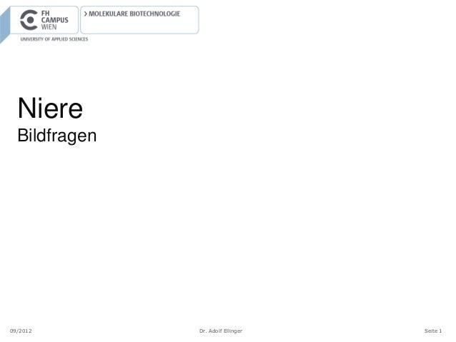 Niere  Bildfragen09/2012        Dr. Adolf Ellinger   Seite 1