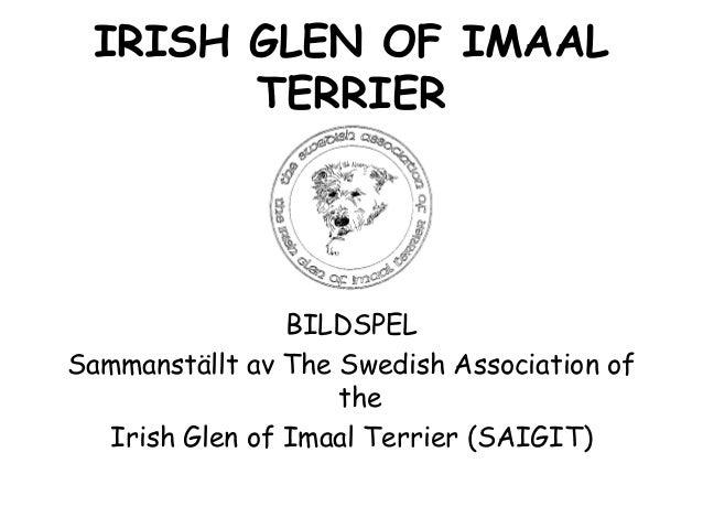 IRISH GLEN OF IMAAL TERRIER BILDSPEL Sammanställt av The Swedish Association of the Irish Glen of Imaal Terrier (SAIGIT)