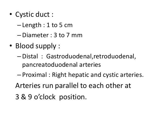 Common bile duct