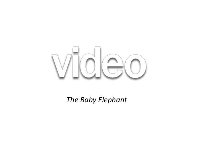 The Baby Elephant