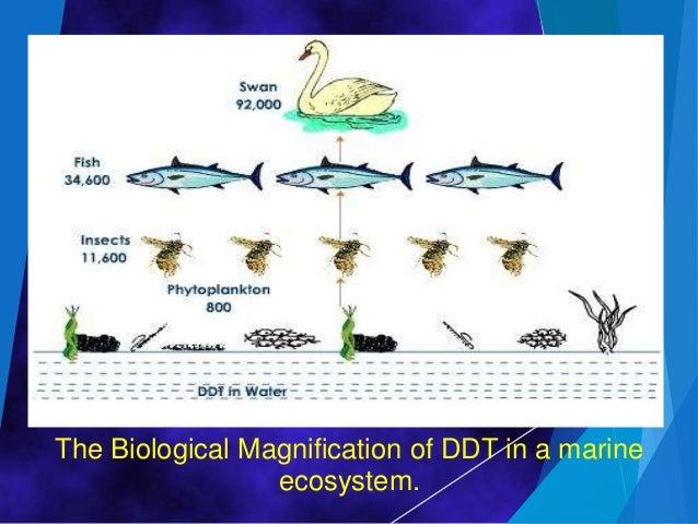 Bilogical magnification