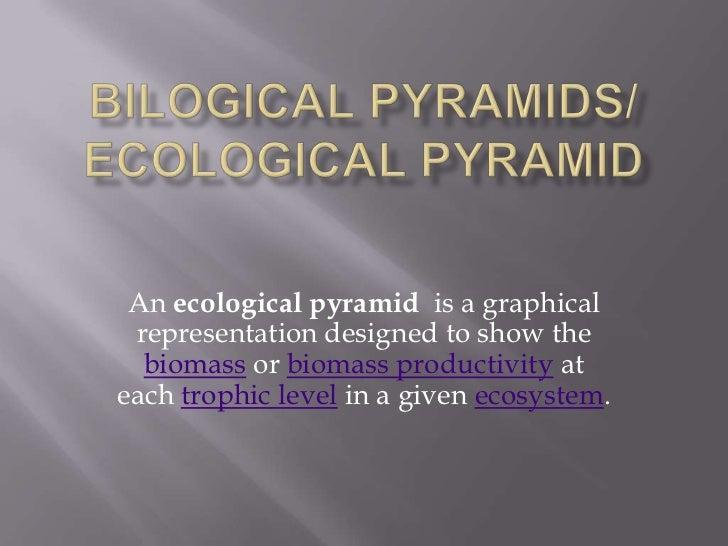 Bilogical Pyramids/ Ecological Pyramid<br />An ecological pyramid  is a graphical representation designed to show the biom...