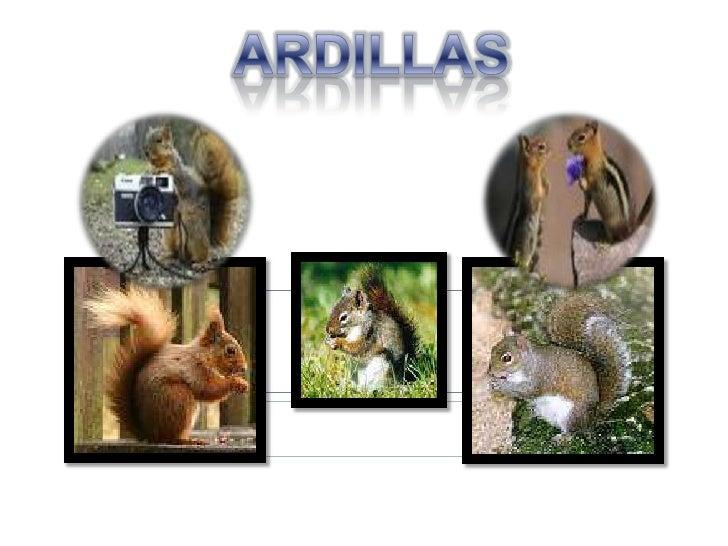 ARDILLAS<br />