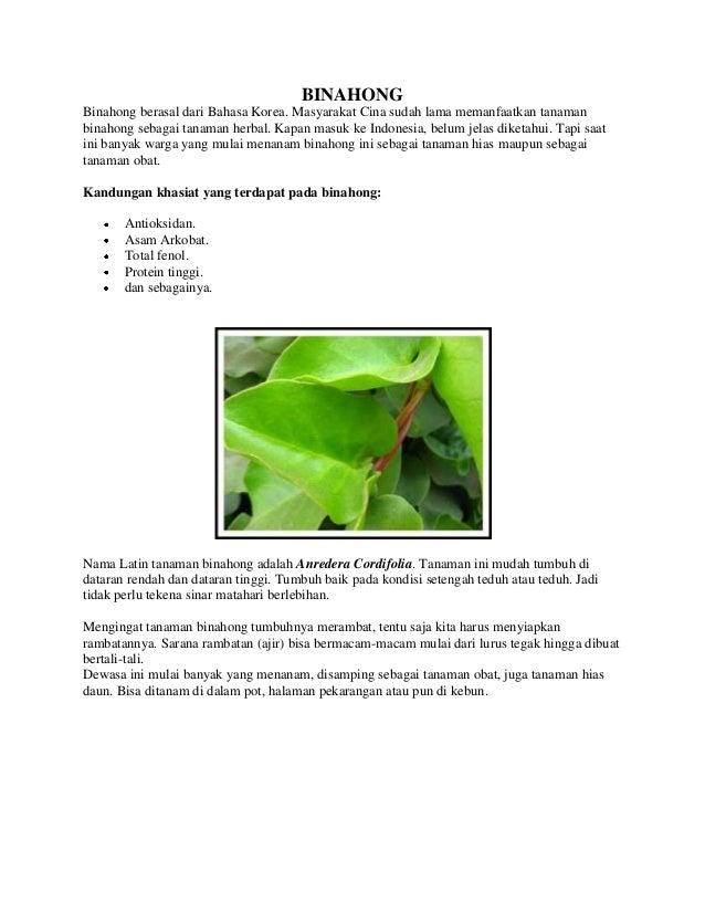 BINAHONG Binahong berasal dari Bahasa Korea. Masyarakat Cina sudah lama memanfaatkan tanaman binahong sebagai tanaman herb...