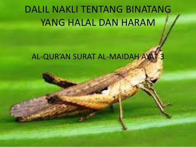 43+ Gambar Binatang Halal HD