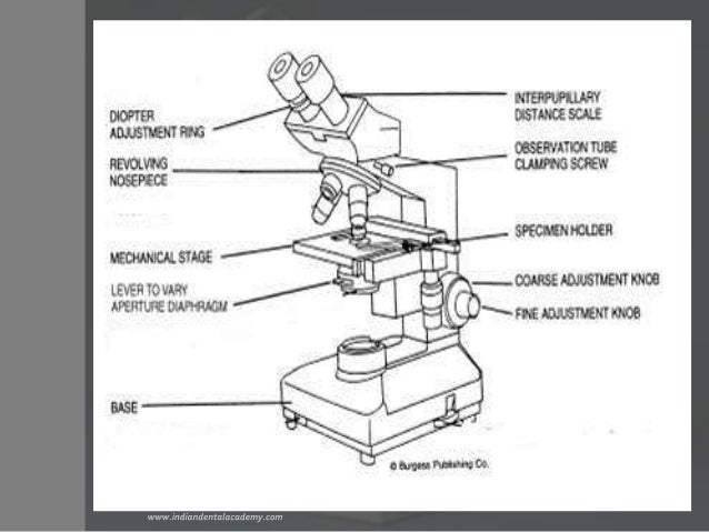 Diagram of a binocular microscope trusted wiring diagram binoculars microscope prosthodontic courses rh slideshare net diagram of a binocular compound microscope full diagram of a binocular microscope ccuart Gallery