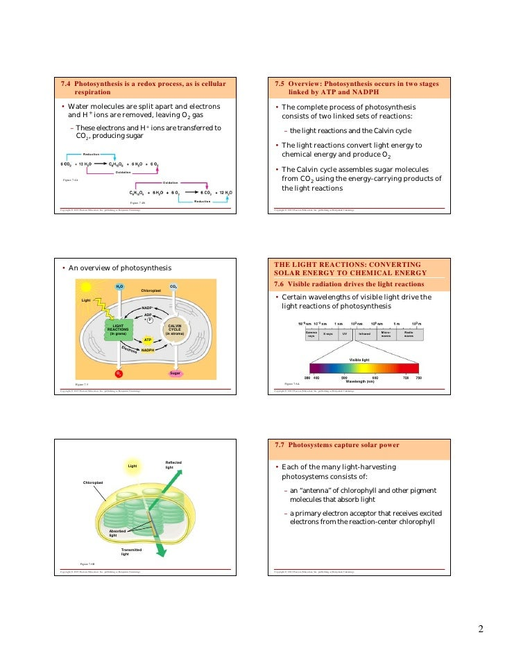 7.4 Photosynthesis is a redox process, as is cellular                                                               7.5 Ov...