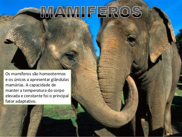Os mamíferos são homeotermos e os únicos a apresentar glândulas mamárias. A capacidade de manter a temperatura do corpo el...