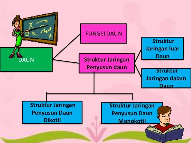 Struktur Jaringan dan Fungsi Daun