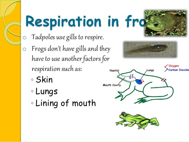 Essay on frog in english