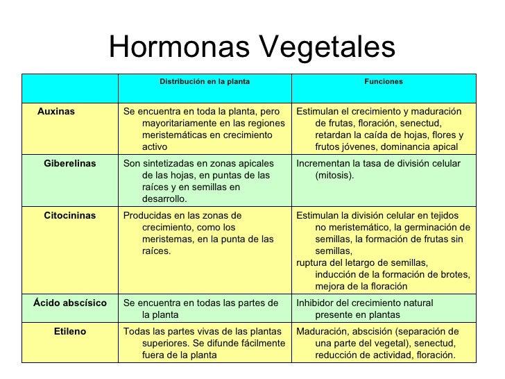 Bio 24 for Hormonas en las plantas
