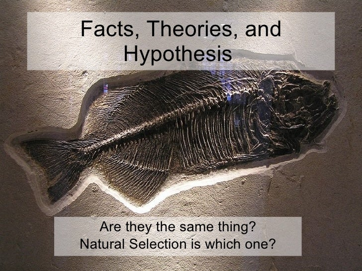 Facts, Theories, and Hypothesis  Are they the same thing? Natural Selection is which one?