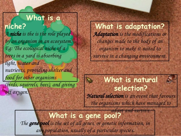 niche?  What is a  A niche is the is the role played by an organism in an ecosystem. Eg: The ecological niche of a trees i...