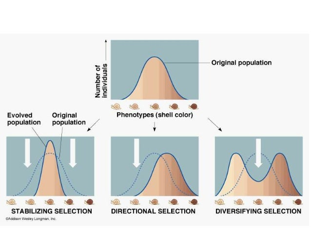 what is diversifying selection