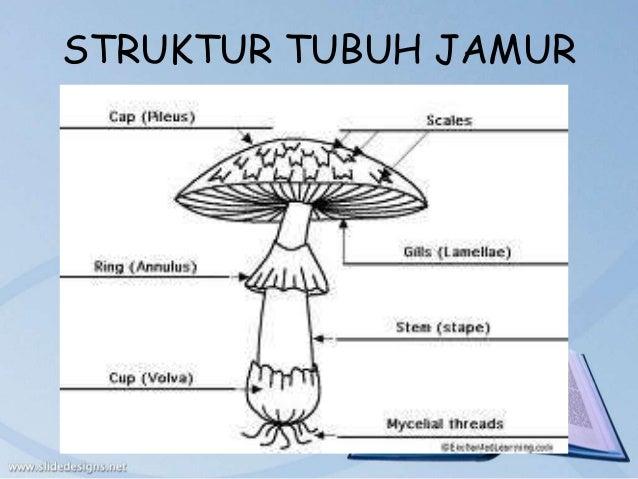 Struktur tubuh jamur basidiomycota asexual reproduction