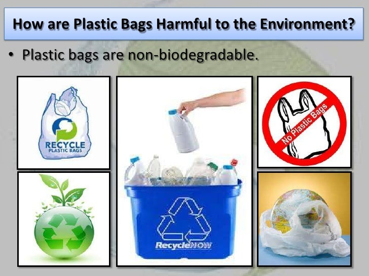 harmful effects of plastic essay Free essays on essays on harmful effects of plastic get help with your writing 1 through 30.