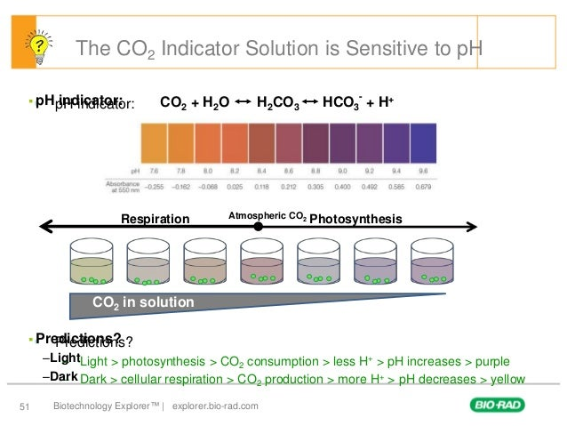 cell respiration and photosynthesis lab report Elodea photosynthesis lab science project: elodea photosynthesis lab 38 based on 51 ratings than othersplants use carbon dioxide and produce oxygen gas during photosynthesisthey produce carbon dioxide during cellular respirationin this experiment.
