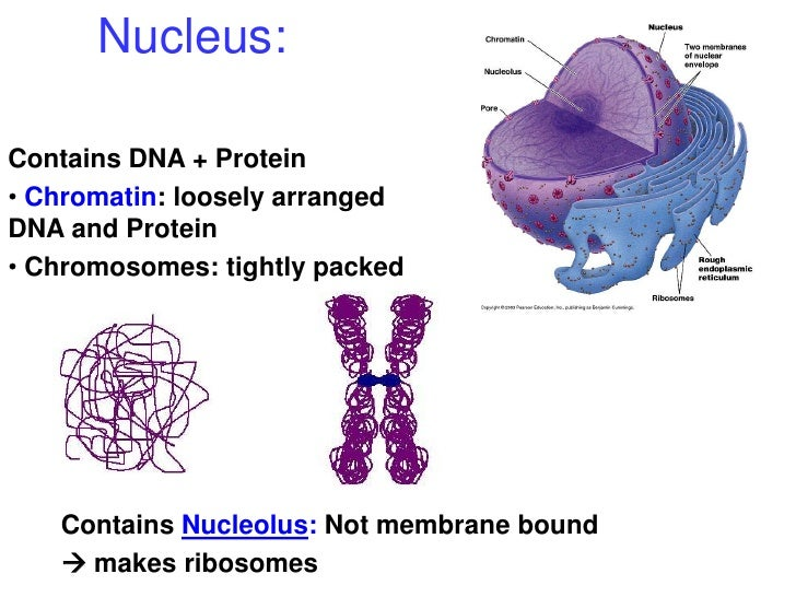 a biological overview of the nucleus Novel 1,3,4-oxadiazole motifs bearing a quinoline nucleus: synthesis,  characterization and biological evaluation of their antimicrobial, antitubercular,.